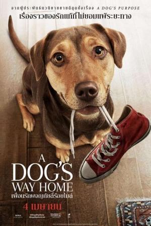 A Dog`s Way Home เพื่อนรักผจญภัยสี่ร้อยไมล์ (2019)  - Cover