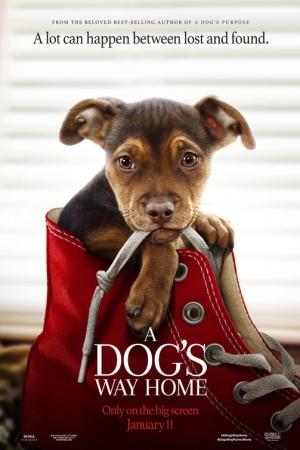 A Dog`s Way Home (2019) : เพื่อนรักผจญภัยสี่ร้อยไมล์ - Cover